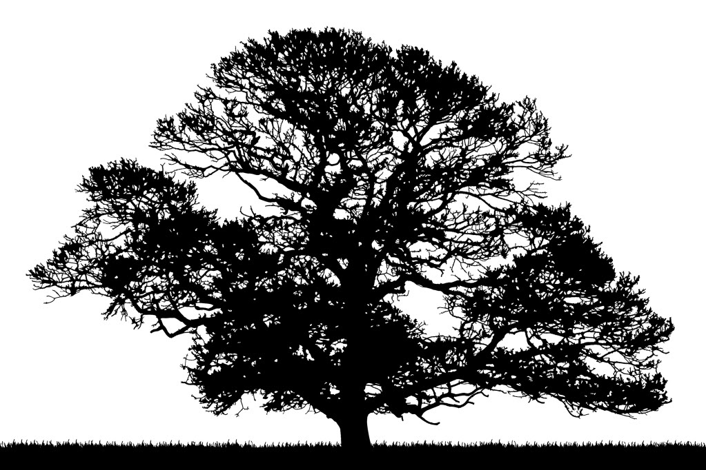 oak-tree-silhouette - Exeunt Magazine