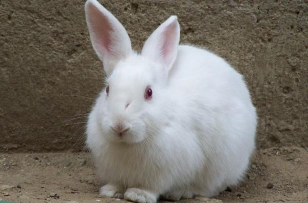 Rabbits, Riots and the Algorithmic Gaze
